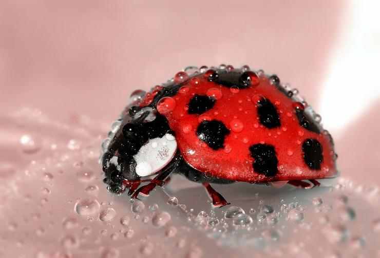 ladybug-1036453